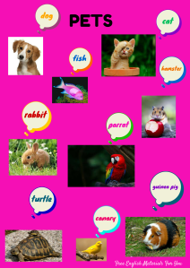 English Vocabulary - PETS