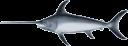 12065772261888188981yves_guillou_swordfish_1.svg.med.png
