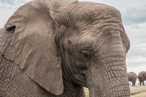 Endangered Elephant Trunk Skin Care African Big