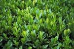 Plants Flora Foliage Greens Greenery Leafy Leaves