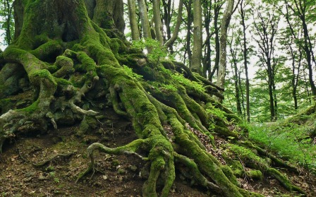 root-276636_1920.jpg